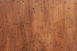 houtworm opsporen