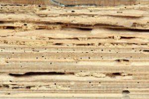 schade door houtworm